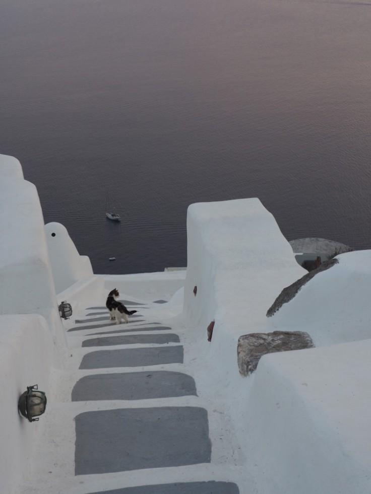 Chat dans des escaliers blancs surplombant la mer au crépuscule, île de Santorin