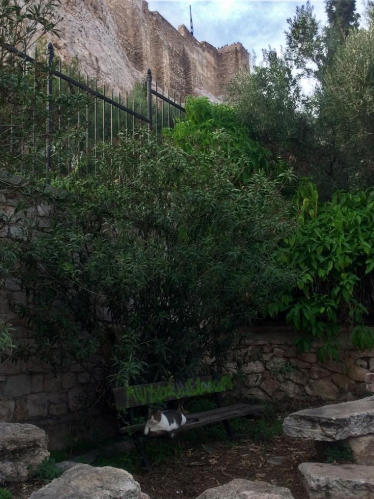 Chat allongé sur un banc tagué sur l'un des versants de l'Acropole.