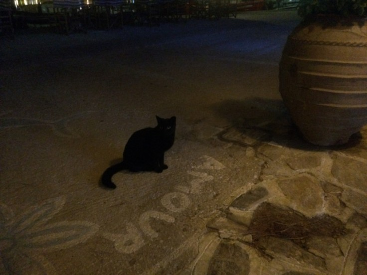"""Chat noir de nuit assis juste devant le mot """"amour"""" peint au sol."""