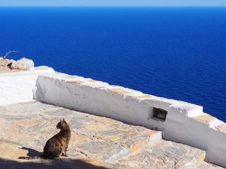 Chat sur une terrasse blanche surplombant la mer d'un bleu intense à Amorgos.
