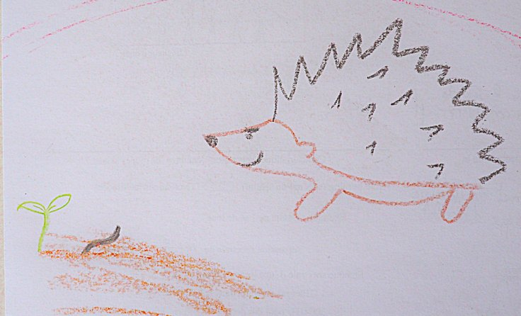 dessin de hérisson lorgnant sur une limace qui s'apprête à attaquer un semis