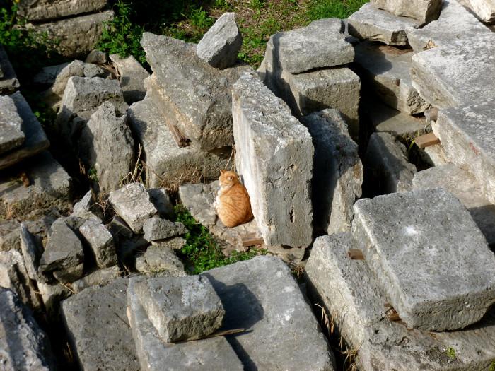 Chat roux parmi les pierres des ruines de Rome