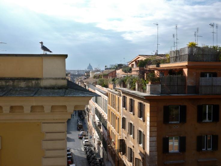 Vue de haut d'une rue de Rome avec un goéland au premier plan à gauche et la coupole de Saint-Pierre dans le fond.