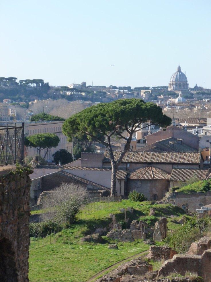Vue sur les toits de Rome depuis le mont Palatin : pin parasol au premier plan, baslique Saint-Pierre dans le fond.