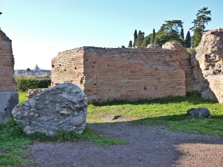 Enorme lapin dans l'ombre des ruines du Palatin, vue sur la basilique Saint-Pierre à l'horizon.