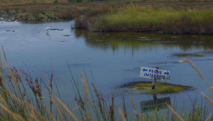 """Panneau """"pêche interdite"""" au milieu d'un étang avec une aigrette à l'arrière plan"""